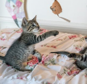 Adorable cats playing